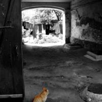 Кинозал рыжего кота...