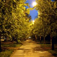 Вечерняя дорожка