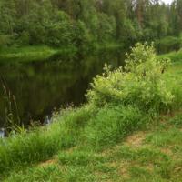 На берегу лесной реки