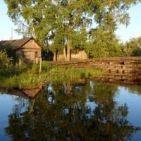 Дерево и его отражение