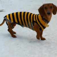 кофточка из пчёлки