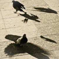 Души Летящих Птиц