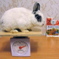 Кролики-это не только ценный мех
