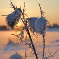 Колючий холод