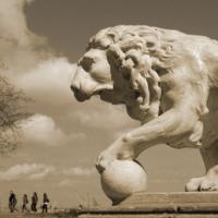 Лев и туристы