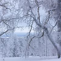 Дремлет лес под сказку сна...