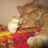 Сладкий сон!)))