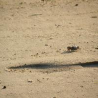 На песчаном берегу...