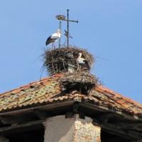 Аист на крыше, мир на Земле