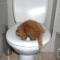 Лови кота!!!)))