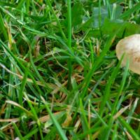 Маленький среди обильных трав