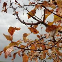 Солнце играет на листьях