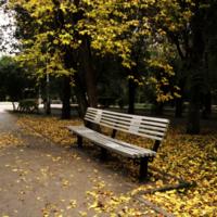 Осень пришла в парк