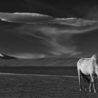 Лошадь и облако