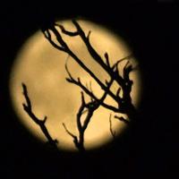 Схватившие Луну