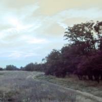 Лес за чертой дороги