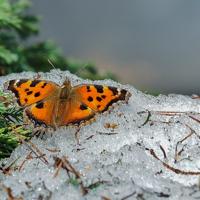 Первая бабочка!...