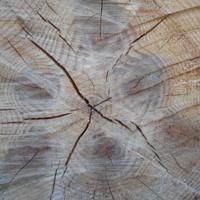Годовые кольца дерева