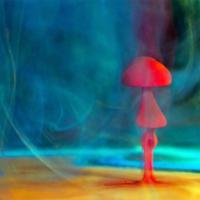 Необычный гриб