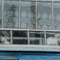 Кошки в окошке