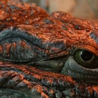Крокодиловый глаз