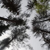 Природа- своеобразный тетрис