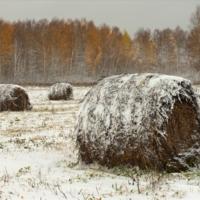 Осень юные морозы