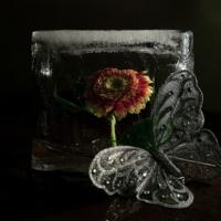 Ледяная бабочка