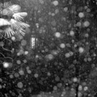 Снежный горошек.