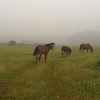уходят в утренний туман