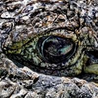 Взгляд крокодила