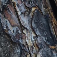 деревянные рисунки