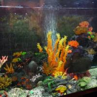 Палитра аквариума