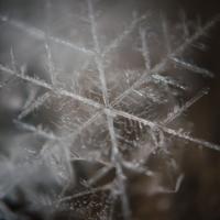 Меленький ледяной цветок