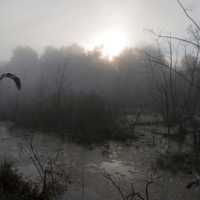Утро на болоте.