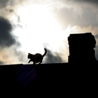 Прогулка по крыше