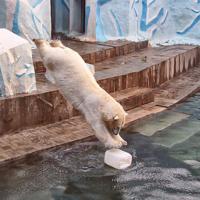 Прыжки в воду 3