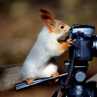 Фотограф.