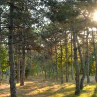 Чудесная панорама леса