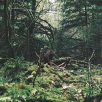 Тайны лесаII