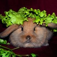 Кролик свежий  под салатом