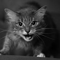 Срашнее кошки зверя нет!!!!!!