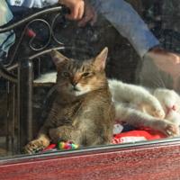 Кошачье кафе в Питере