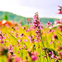 Полдень в июне шелестел цветами
