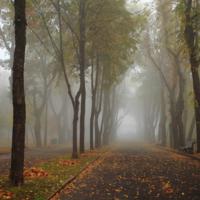 Аллея вновь в тумане