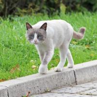Кошка, что гуляет сама по себе
