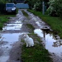 Вася ждёт Мусю.