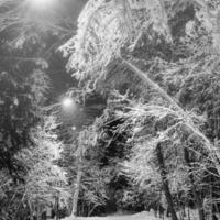 ночная лыжня