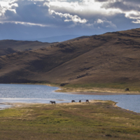 Ходят кони к водопою
