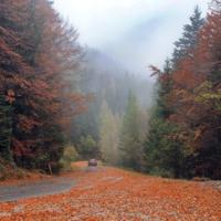 По ковру из красных листьев